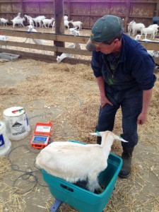 Animal Rearing Specialist