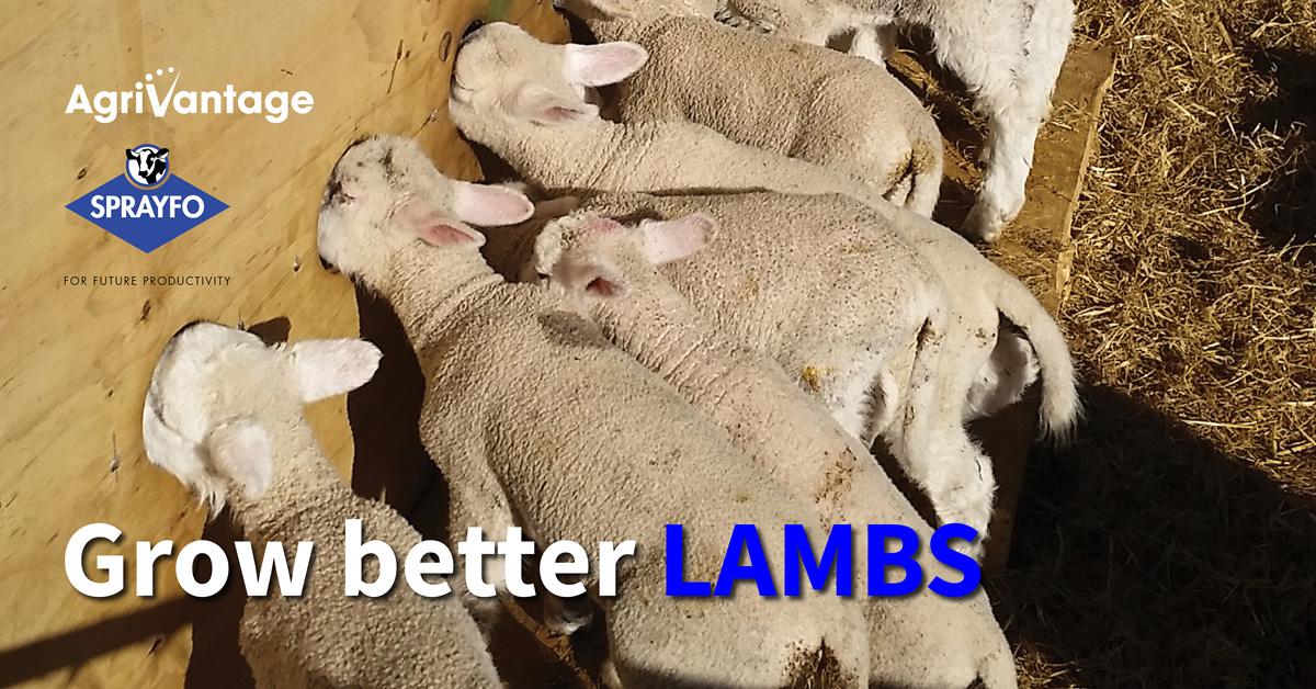 Lamb seminar