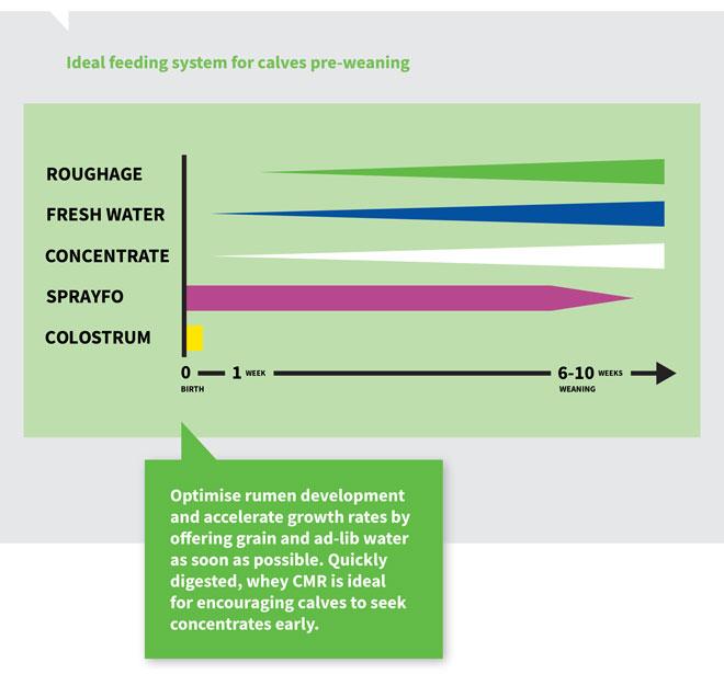 calves pre-weaning feeding system