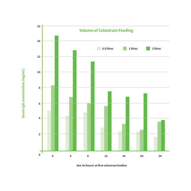 Volume of colostrum feeding