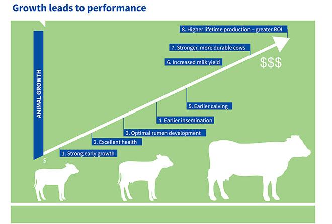 Grow better calves