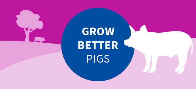 Grow better pigs with AgriVantage