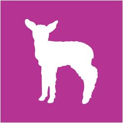 Agrivantage Lamb