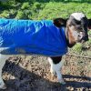 Fortify cows milk with CMR