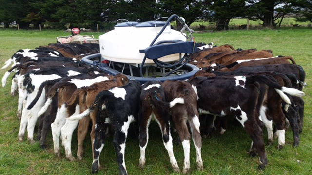 Lisa Paterson made the switch to Sprayfo whey-based calf milk replacer
